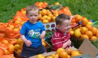 Two boys in grapefruit harvest.JPG
